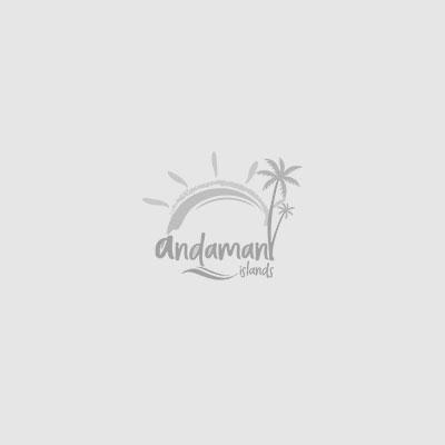 Honeymoon Tour Package in Andaman Islands