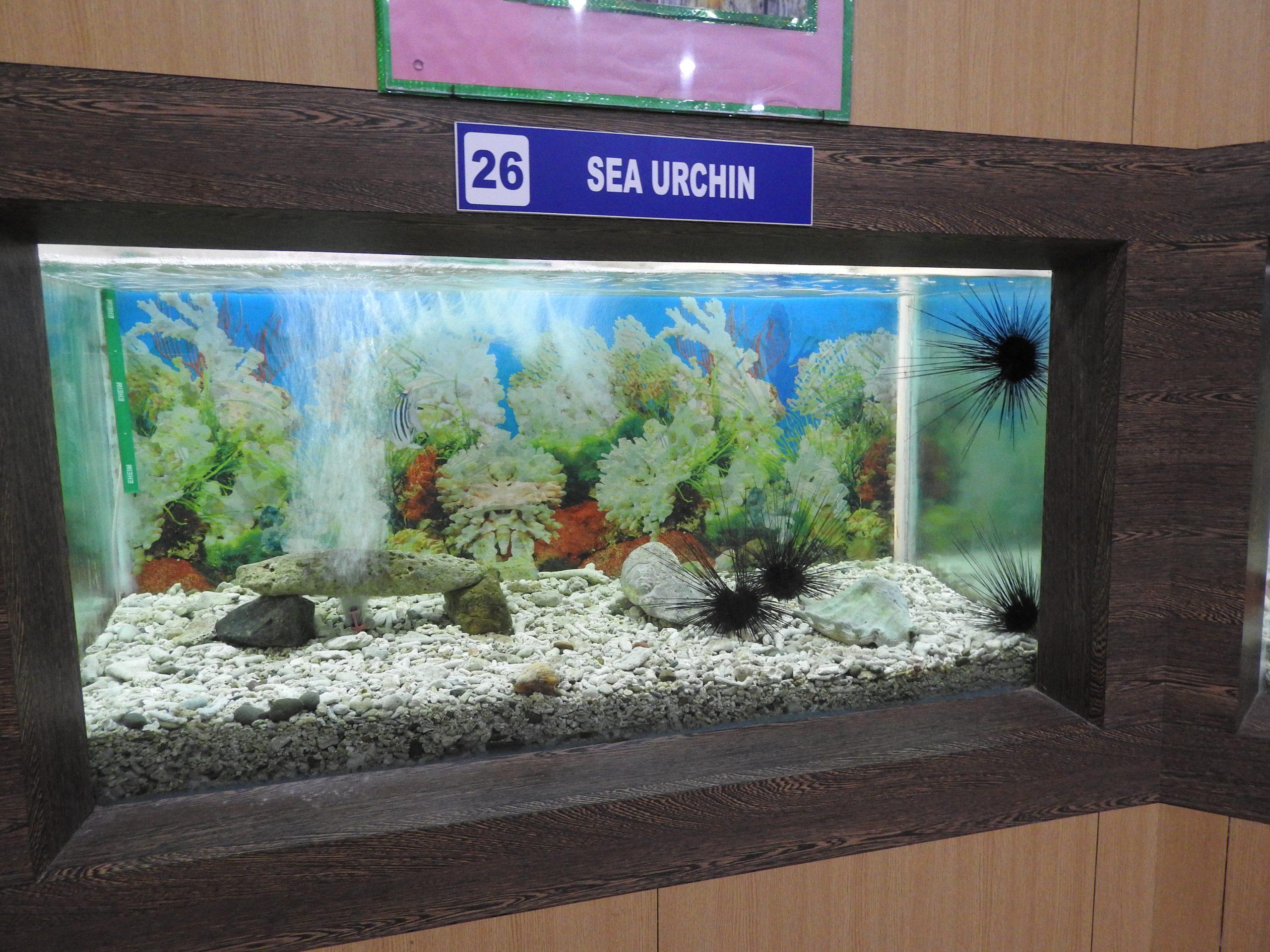 Fishries Musem