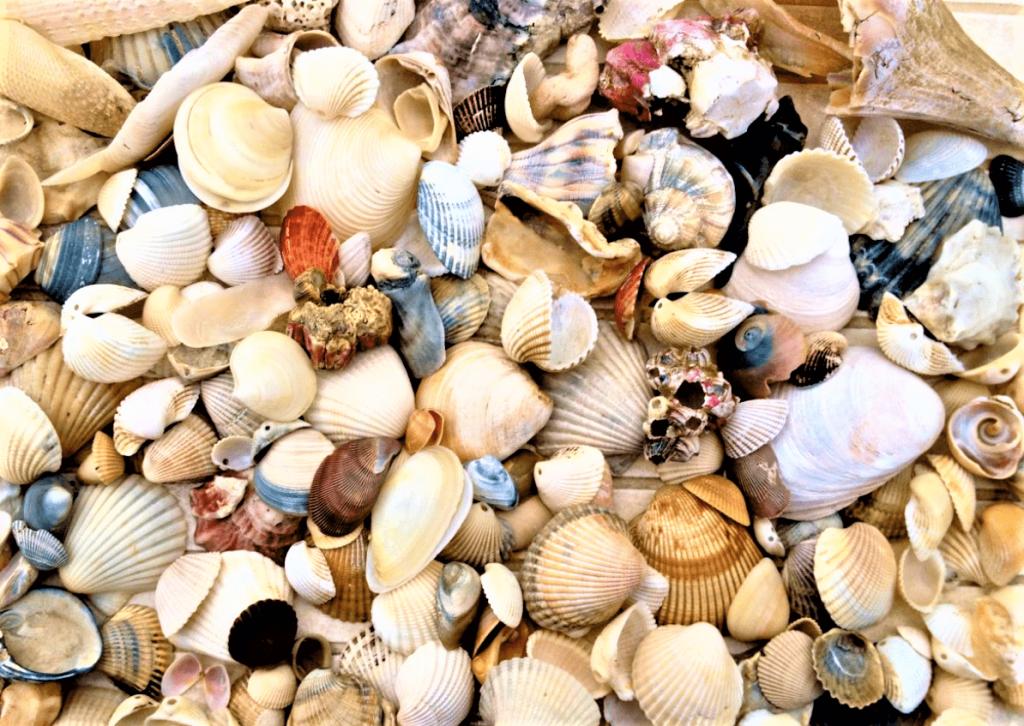 Shells-min-1024x726.png