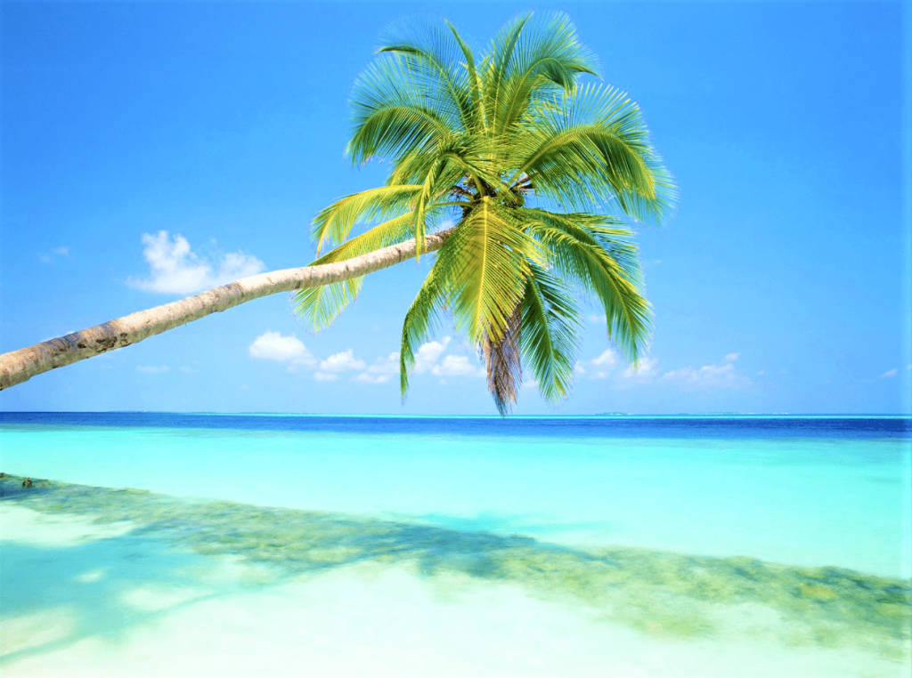 Beaches-in-Andaman-1-min-1024x762.png
