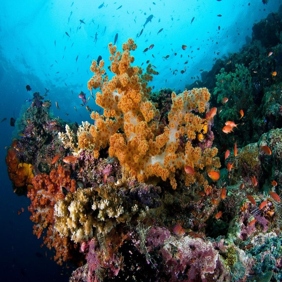 Semi Submarine Ride in Port Blair