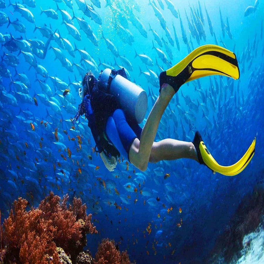 Try Scuba Diving in Havelock Island